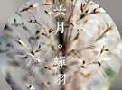"""中国和日本的""""农历""""大不同"""